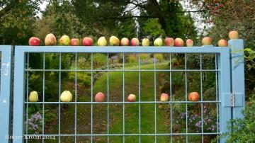 Kleingärten Langsee - 5284