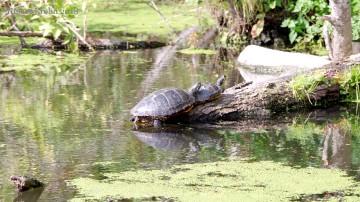 Schildkröten - 7793
